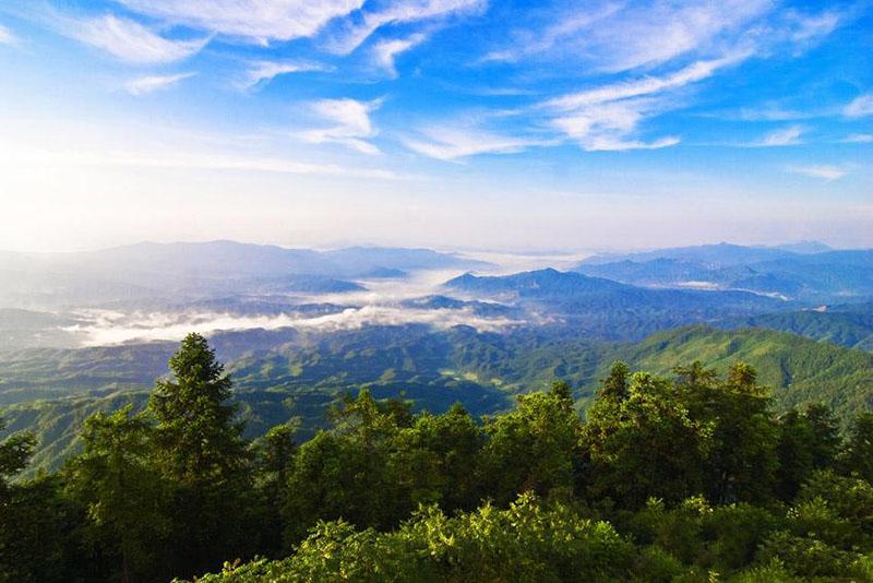 南岭植物王国——九龙江国家森林公园.图片来源:人民网