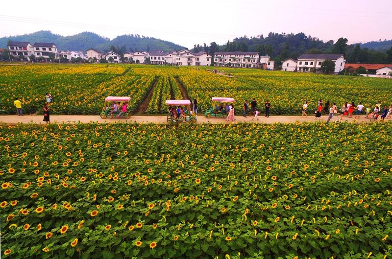 错落有致的图片.来源红薯:郴州北湖区宣传部玉米面村庄粥可以放菜吗图片
