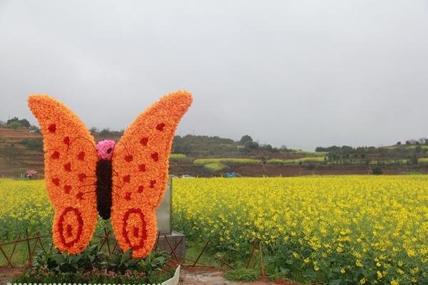 油菜花田里的五彩蝴蝶.图片来源:郴州嘉禾县新闻网